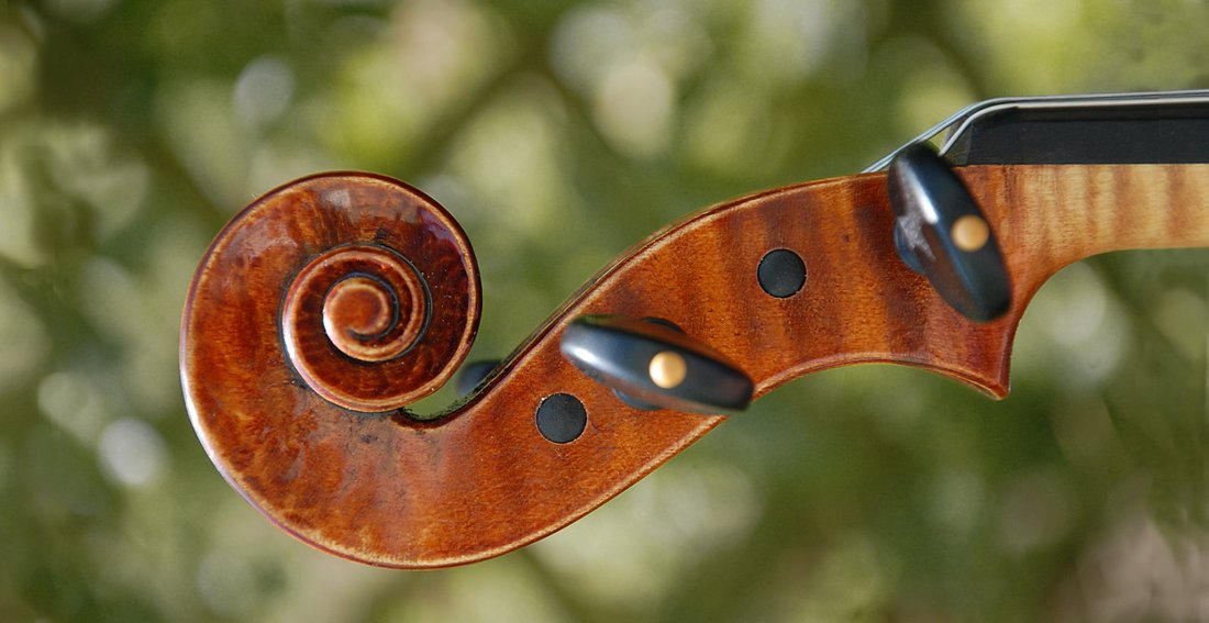 fresh violin scroll